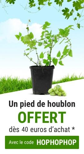 Pied de Houblon