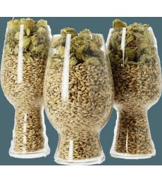 Set of Craft Beer tasting glasses